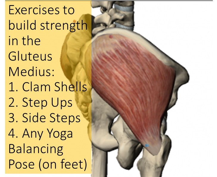 Gluteus Medius: Small Muscle with a Big Purpose