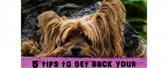 Top 5 Tips To Get Back Your Running Motivation