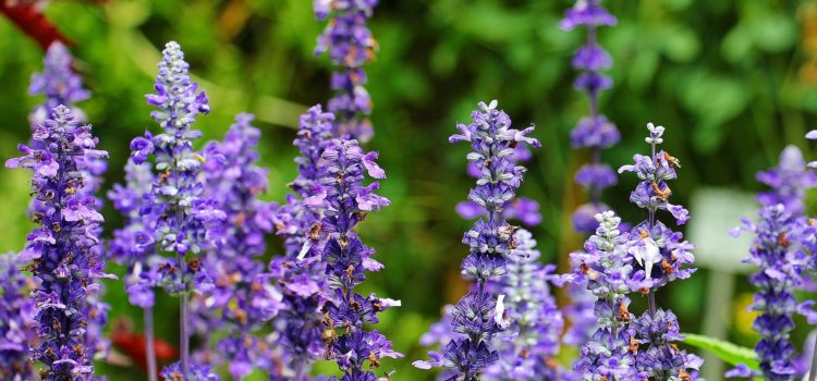Basic Use Tips & Guidelines of Essential Oils